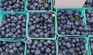 bąblowica objawy, bąblowica przyczyny, jagody, owoce leśne
