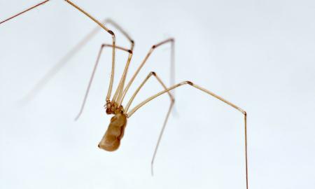 ukąszenie pająka, ukąszenie przez pająka, pustelnik brunatny, amputacja nogi