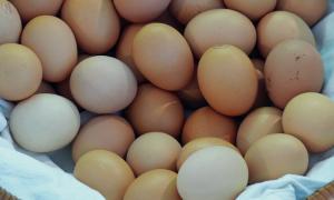 jajka, właściwości jajek, jajka a zdrowie, jajka a cholesterol
