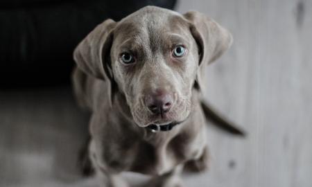 pies, powody dla których warto mieć psa, adopcja psa
