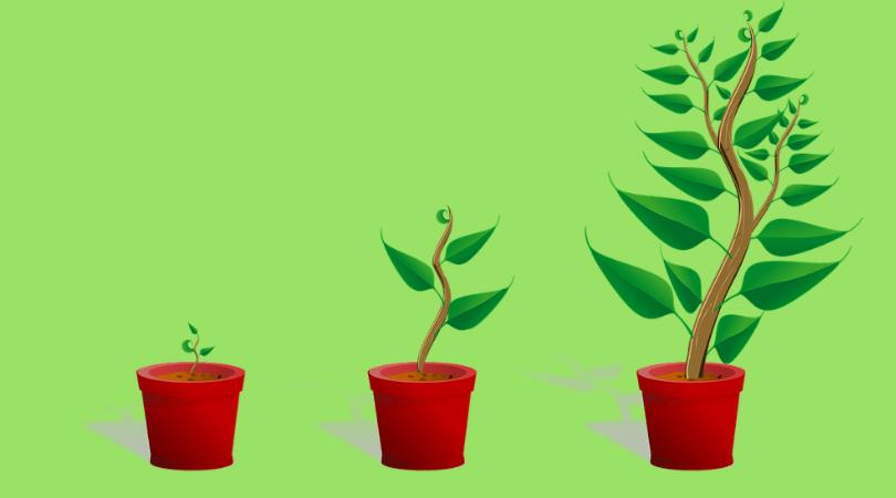 rośliny doniczkowe, Sansewieria, Sansewieria właściwości zdrowotne