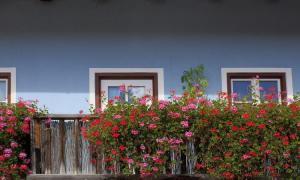balkon, rośliny balkonowe,