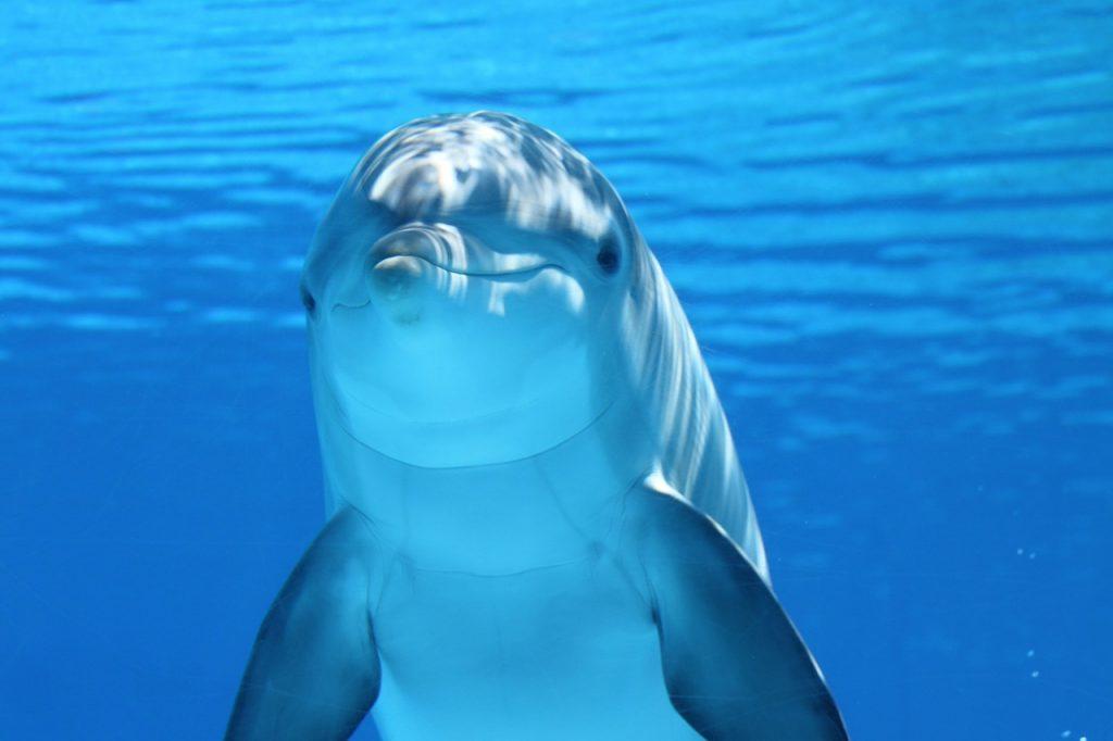 z delfinami