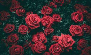 Walentynek