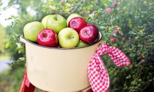 owoców