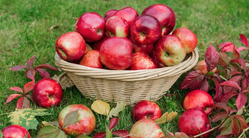 jabłek