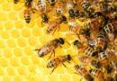 Powietrze z uli pszczelich leczy! Czym jest uloterapia?